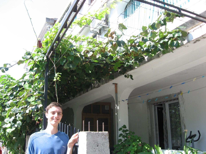 чорногорія фрукти які ростуть фото відео