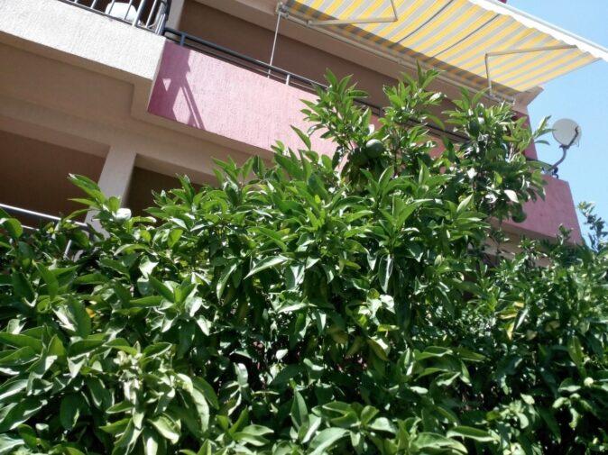Тропічні фрукти в Чорногорії