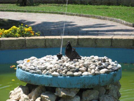 У Которі було так жарко, що навіть голуби намагалися остудитися у фонтані.