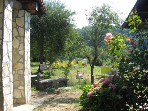 Гірська пасіка в монастирі Морача