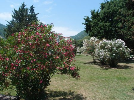 Климат и погода Черногории