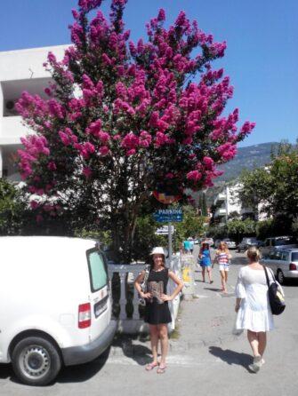 Середземноморський клімат Чорногорії
