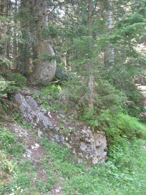Дремучий лес в парке Дурмитор