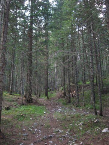 Необычные горы в парке Дурмитор, Черногория
