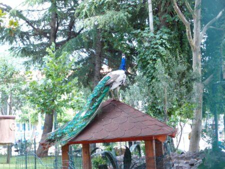 Мини-зоопарк в Будве