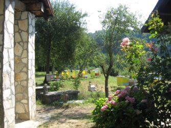 Монастирська пасіка в Морача