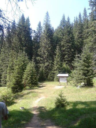 Хвойний ліс в Дурміторі