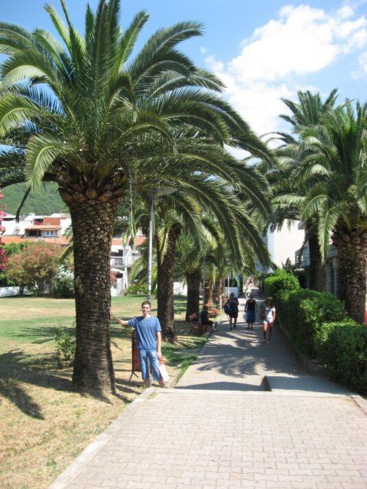 Небольшие пальмы в Будве