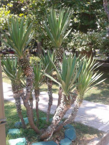 Растения Будвы