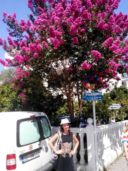 Такі дерева у Будві на кожному розі