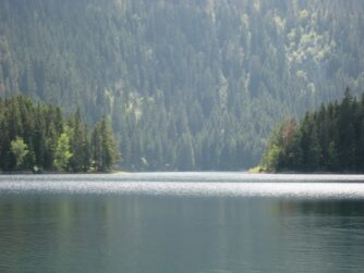 Лес за Черным озером