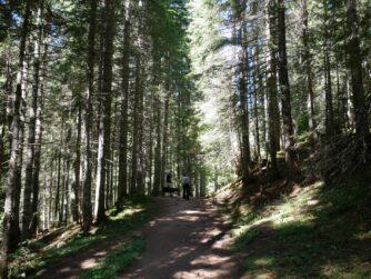 Лісова стежка по якій ми йшли
