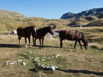 Коні пасуться високо в горах