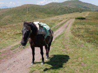 Катание на лошадях высоко в горах
